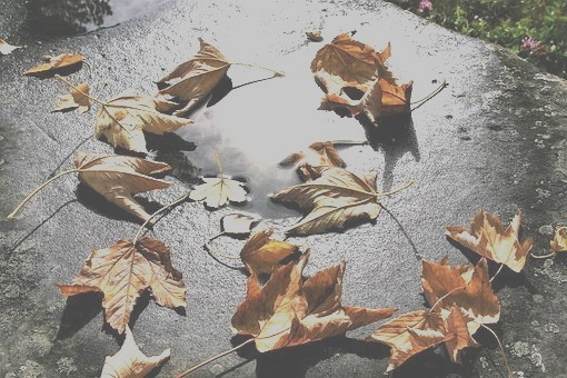 photo of fallen leaves in autumn to accompany my poem about the ending of things