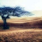 A poem by Tricia McCallum May 11, 2020. A parched windswept landscape in sepia tone with a large bare tree in foreground.